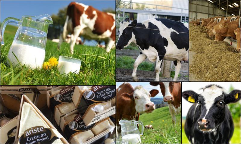 Çiftlik Sütlerinin Hepsi Aynı Mıdır