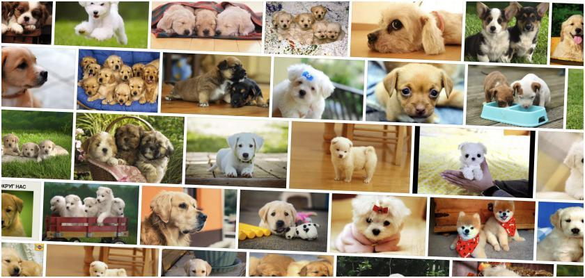 Yavru Köpek Bakımı Nasıl Olmalıdır?
