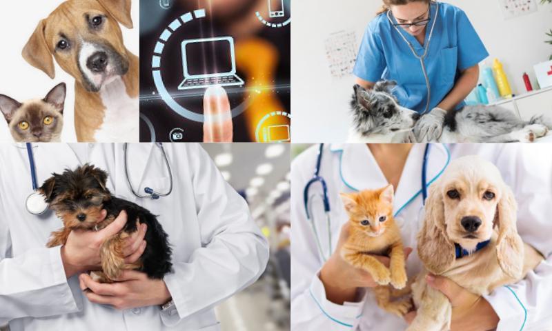 Veteriner Klinik Uygulaması Nedir