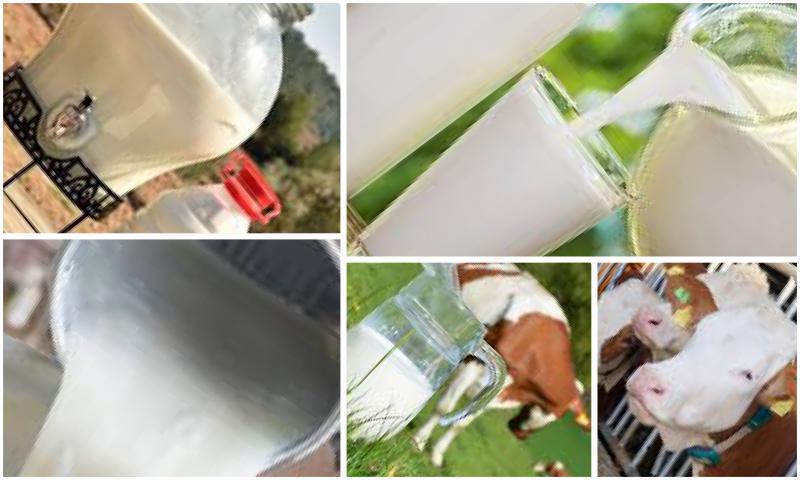 Çiğ Süt Hakkında Her Şey