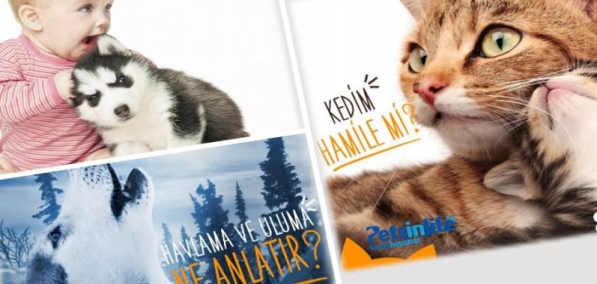 Kediler İçin Zararlı Olan Bitkiler Hangileridir