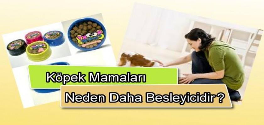 Köpek Mamaları Neden Daha Besleyicidir