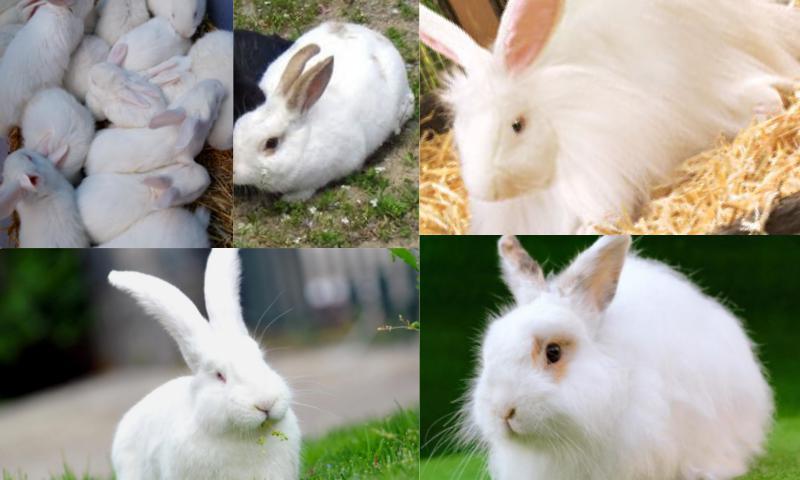 Tavşan Piyasası Nedir?