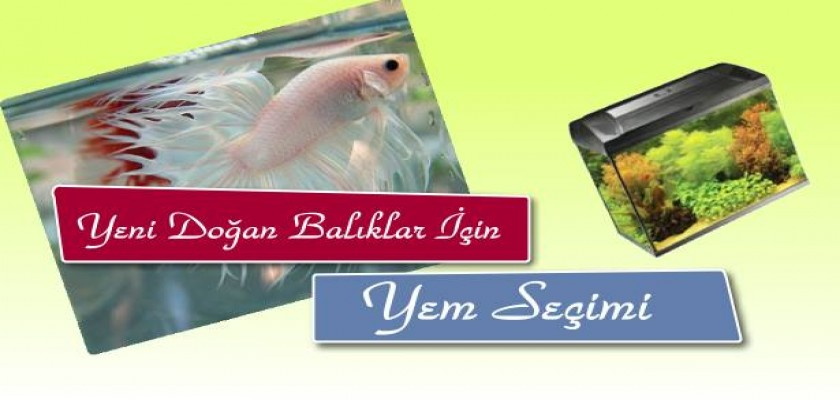Yeni Doğan Balıklar İçin Hangi Balık Yemi Tercih Edilmelidir?